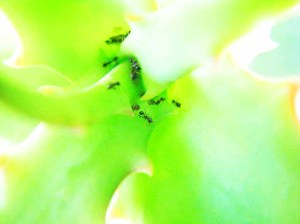 Some ants on a plant at the MOOF Center